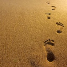 Kaizen Your Life: 7 Steps