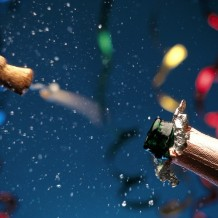 Celebrate Success!7 How-To's