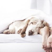 7 Healthy Sleeping Habits
